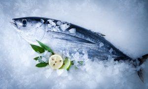 albacore tuna on ice