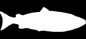Sockeye salmon white thumbnail