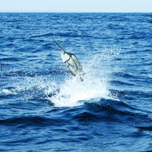 Jumping swordfish out of the water