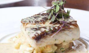 parrotfish dish filet